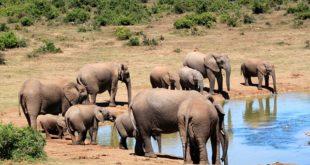 Safari en Afrique