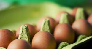 œufs contaminés au fipronil